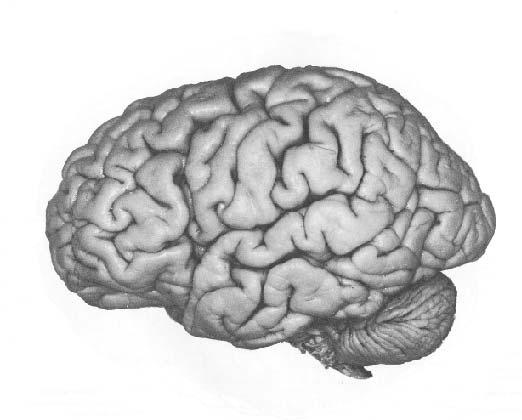 Мозг в режиме онлайн - фантастика, которая стоит на пороге реальности!