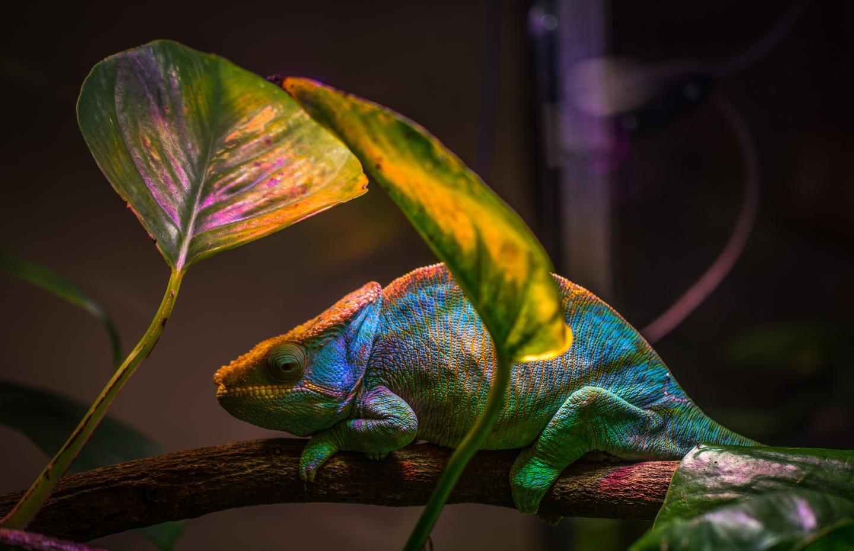 Создан нанолазер, который меняет цвет как хамелеон