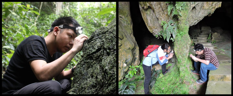 Борнео - поистине кладезь новых видов!